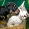 Životinjski kviz
