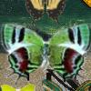 120 skrivenih leptira 2