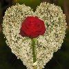 Jigsaw: Ljubavne latice