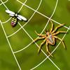 Paukova mreža