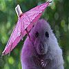 Miš sa kišobranom