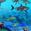 Ima puno riba u okeanu